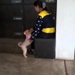 Der süßeste Hund überhaupt