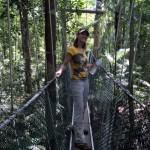 Hängebrücke beim Canopy Walk