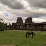 Angkor Wat Pferd